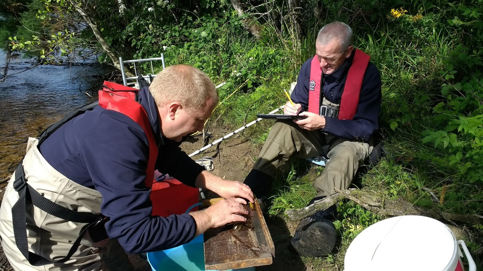 Ness and Beauly Fisheries Trust biologists processing fish during an electrofishing survey